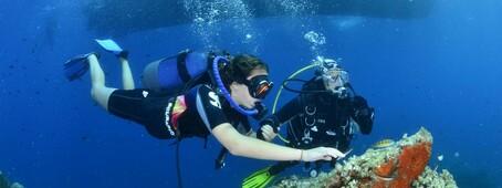 A la découverte des fonds marins