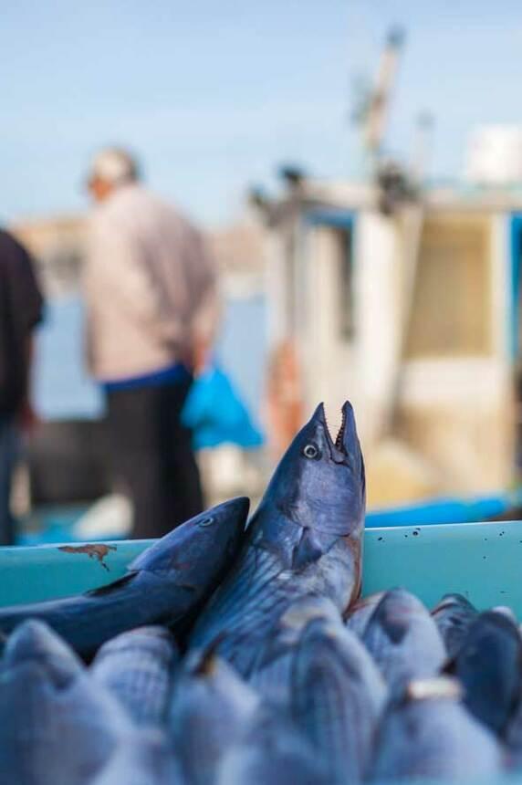 Etal des pêcheurs 2