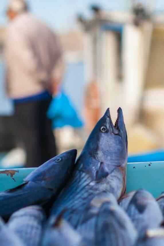 Etal des pêcheurs